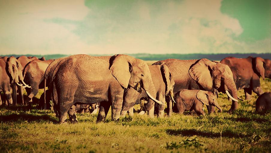 Frågor och svar om att åka på safari till Sydafrika